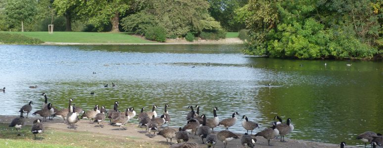 Ducks at Alvaston Park