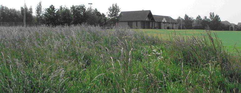 photograph with long grass in foreground and community building in background