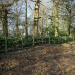 Volunteers make fast work of ancient hedge