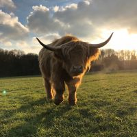 Highland Grazing at Allestree Park