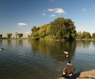 Image for link to Alvaston Park