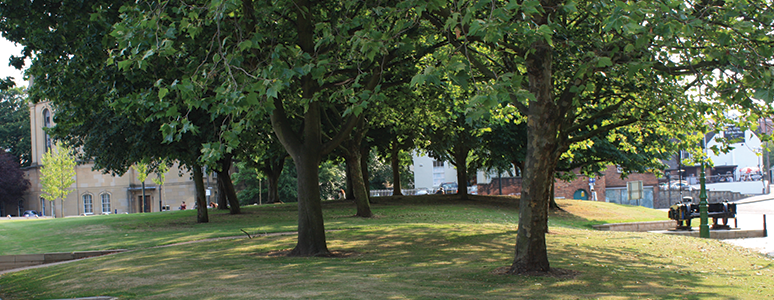 Trees on Cathedral Green