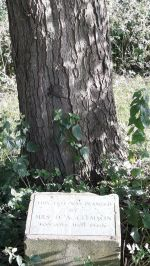Clemsons Park - plaque under Alnus cordata planted 10-Jun-1970
