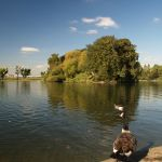 Alvaston_park_-_lake.jpg