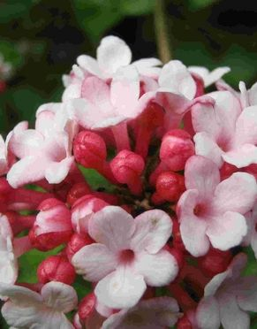 Image for Hydrangea Derby Open Day